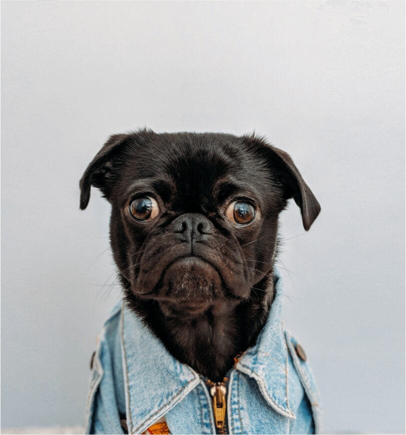 Hur gör man HLR på en hund?
